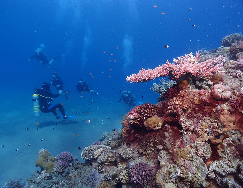egypt-red-sea-min.jpg